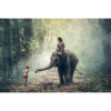 تابلو شاسی طرح زیباترین عکس های جهان- جنگل رویایی کد 65