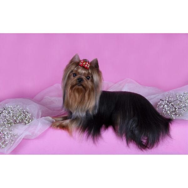 تابلو شاسی سری حیوانات دوست داشتنی طرح سگ خوش تیپ کد 154