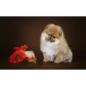 تابلو شاسی سری حیوانات دوست داشتنی کد 162