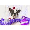 تابلو شاسی سری حیوانات دوست داشتنی طرح سگ خوش تیپ کد 169