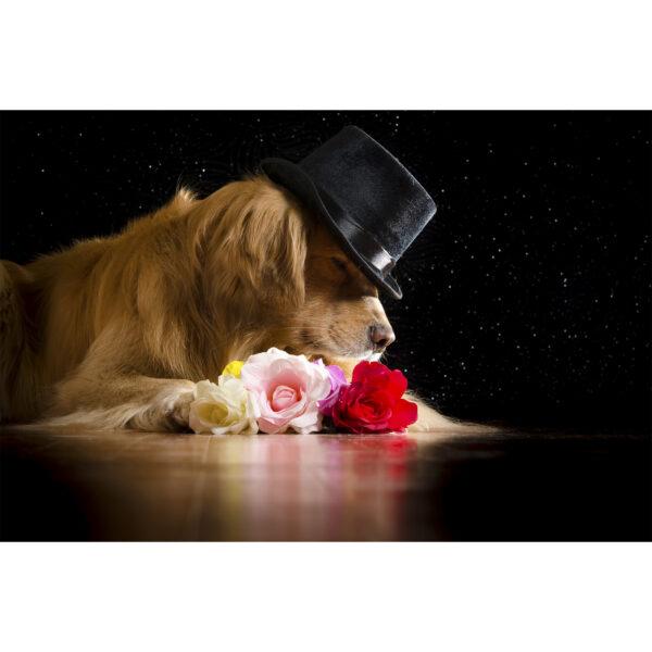 تابلو شاسی سری حیوانات دوست داشتنی طرح سگ خوش تیپ کد 172