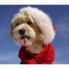 تابلو شاسی سری حیوانات دوست داشتنی طرح سگ خوش تیپ کد 176